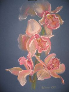 Storczyk - pastel Helena