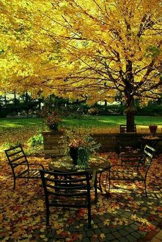 Autumn table under the tree. I can almost smell the sweet fall breeze and hear the leaves blowing by on the ground. Foto Nature, Autumn Table, Autumn Park, Seasons Of The Year, Jolie Photo, Mellow Yellow, Vintage Roses, Fall Season, Autumn Leaves