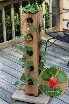 58 Ideas Garden Boxes Diy Strawberry Planters For 2019 Vertical Vegetable Gardens, Indoor Vegetable Gardening, Container Gardening, Urban Gardening, Veggie Gardens, Gardening Books, Tower Garden, Garden Boxes, Garden Planters