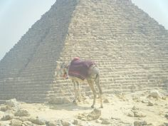 Donkey at Giza we are about 1/2 km away up on a small ridge but the donkey looks like he's right up against a mini pyramid 2009