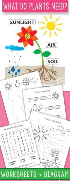 What do Plants Need for Growth Worksheets for Kindergarten and 1st grade #kindergartenworksheets #printableworksheets #1stgrade