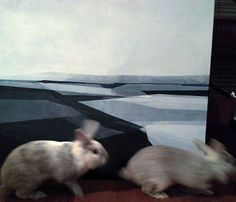 • prove generali, pronte ma non troppo! #birbifuriss  http://aduamartinarosarno.it  Giorno #30 #100daysofintuitiveart http://aduamartinarosarno.it  #aduamartinarosarno #artist #arteitaliana #acrylicart #fineart #artgallery #painting #artnerd #instaart #paintingoftheday #worldofartists #abstractart #abstractpainting #landscapepainting #artcollector #art #artistoninstagram #contemporaryart #kunst #bunny #kunstner #artoftheday #paintingoftheday #wip #texture
