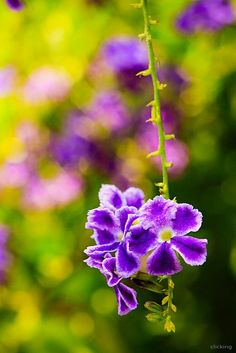 Beautiful #flowers #bokeh #photography