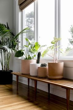 Single Women And Their Spaces: Widow, Mother and Founder of The Bungalow, Christine Sanders - The Fold Living Room Green, Home And Living, Living Room Decor, Bungalow, Window Plants, Diy Plant Stand, Plant Stands, Plant Shelves, Garden Trellis