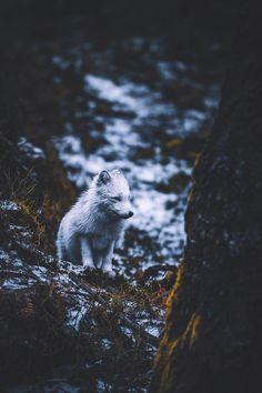 lsleofskye:  winter outfit on point | itseriksen