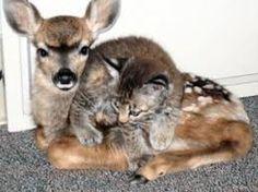 pair of baby animals that
