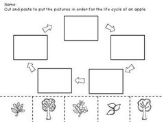 life cycle of an apple sequencing cards preschool apples pinterest sequencing cards. Black Bedroom Furniture Sets. Home Design Ideas