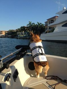Ahoy there! Permission to come aboard... and look for treats!!