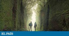 Bosques, bodegas, miradores, caminos, festivales... 20 pistas para emocionantes escapadas por España Tenerife, Plants, Blog, Home, 12th Century, Art Centers, Art Museum, Elopements, Teneriffe