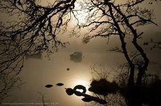 Misty Loch Ness, near Fort Augustus, Highland, Scotland Fort Augustus, The Loch, Scotland, Celestial, Sunset, Nature, Outdoor, Art, Outdoors