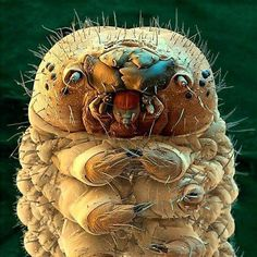 Silkworm under a colour scanning electron microscope.