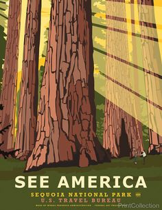 See America poster of Sequoia National Park in the southern Sierra Nevada. Our poster highlights the elegance of this natural wonder of a park filled with Giant Sequoia trees on of the largest species on earth. Illustration by Steven Thomas in 2013.