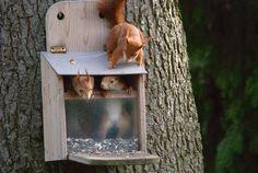 Squirrel Feeder: Plan & Instructions - [GEOLINO] Source by steffipume Squirrel Feeder, Bird Feeders, Station D'empotage, Permaculture Design, Fabric Birds, Parasol, Winter Garden, Garden Projects, Diy Garden