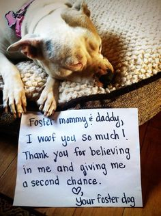 A letter from your foster dog. ♥  They honestly say this with their eyes...