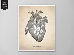 Human Heart Human Anatomy Heart Art Print by theNATIONALanthem
