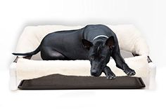 Elevated Bed for Incontinent Dogs and other Pets ** Be sure to check out this awesome product. (This is an affiliate link) #DogBedFurniture