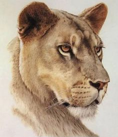 tattoo options :: lioness-head.jpg picture by kakes524 - Photobucket