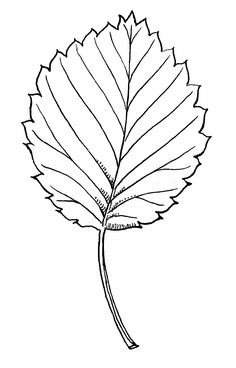 Ausmalbilder malvorlagen bl tter kostenlos zum ausdrucken babyzimmer pinterest bl tter - Herbstblatter deko ...