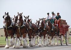 Horses, Wagon, Clydesdales, Carriage