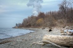 Lake Erie Bluffs - driftwood on natural beach looking east