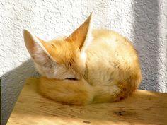 #fox #ears #cute