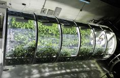 NASA is developing an inflatable greenhouse that could be a long-term food source for astronauts #NASA #space #science