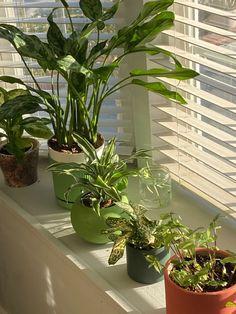 Dream Rooms, Dream Bedroom, My New Room, My Room, Room With Plants, House Plants Decor, Plant Decor, Pretty Room, Room Ideas Bedroom