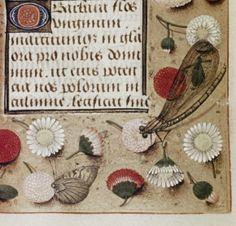Dragonfly Hours of Engelbert of Nassau cent. Book of Hours Flemish Book Of Hours, Medieval Manuscript, Nassau, App, Apps