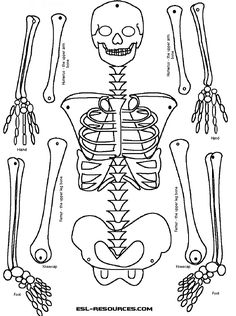 Worksheets Human Skeleton Worksheet Grade4 human body worksheets and skeletons on pinterest science academics pin skeletal system diagram worksheet posted by adaptations grade 4 skeleton diagram