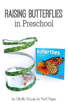 Science for Kids: Raising Butterflies in Preschool. Have you ever raised butterflies with your Preschool or Kindergarten kids? It is an amazing experience! There are many educational benefits of raising butterflies. Check out these awesome tips and ideas here! - Pre-K Pages
