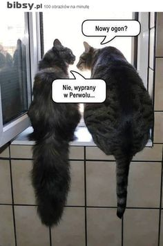 pl – Kot to nie zwierzę, to stan umysłu… Wtf Funny, Funny Cats, Funny Memes, Hilarious, Animals And Pets, Funny Animals, Cute Animals, Science Memes, Weird Words
