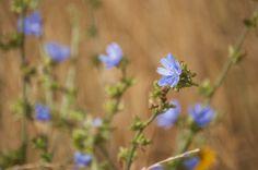 Wildflowers @kansasdiscovery  #topeka #kansas #nature #prairie