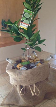 Lime tree and coronas                                                                                                                                                                                 More