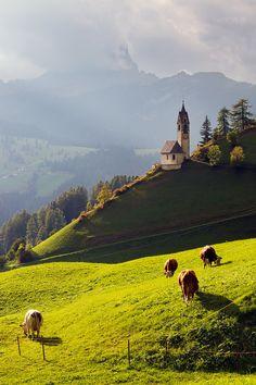 Beautiful Pasture, Dolomites, Italy