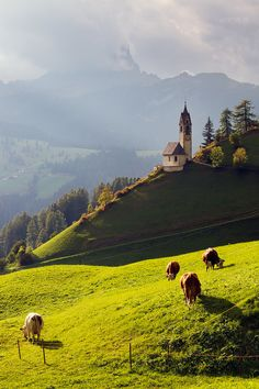 beautiful pasture, Dolomites, Italy