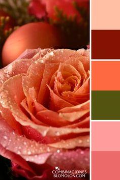 combinacion de colores variedad de temporada 3