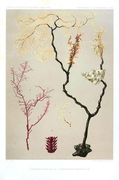 Botanical - Kelp 3