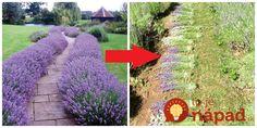 Opýtali sme sa odborníka a toto sú jeho rady! Big Garden, Garden Beds, Lavender Flowers, Purple Flowers, Evergreen Shrubs, Ikebana, Garden Inspiration, Flower Arrangements, Orchids