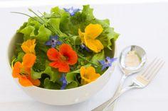 Lichořeřišnice: nedoceněná pomocnice v boji proti zánětům Natural Healing, Health Fitness, Treats, Ethnic Recipes, Lavender, Edible Plants, Boost Immune System, Side Salad, Sweet Like Candy