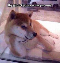 silly dawg!