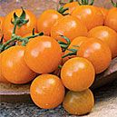 Tomato, Sun Gold from The Cook's Garden. My favorite cherry-type tomato of all time, incredibly sweet for salads or just for a snack by themselves. But then tomatoes are classified as fruit.