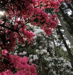 Spring Rodies Tours in Oregon