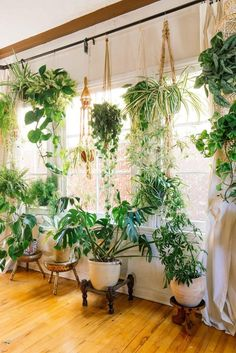 Kitchen window Fiddle leaf figs, pothos, snake plant or succulent: Whatever your green thumb prefers, there's no question that a houseplant adds a lively touch to interior style. Check out these ideas for working houseplants into your own home decor. Plantas Indoor, House Plants Decor, Indoor Plant Decor, Wall Of Plants, House Plants Hanging, Green Plants, Hanging Plant Wall, Big House Plants, Indoor Window Garden
