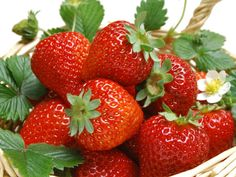 Did you know strawberries are not exactly fruits? The strawberry is a false fruit from the family of roses. The part of we strawberry we actually eat is the stems of the plant and it's the seeds that are the real fruits of the plant. Strawberry Bread Recipes, Strawberry Seed, Strawberry Plants, Grow Strawberries, Strawberry Pictures, Best Salad Dressing, Banana Health Benefits, Spring Allergies, Strawberries