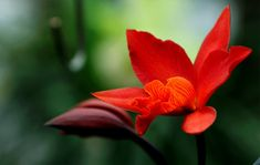 Free stock photo from Hiếu · Pexels Red Orchids, Green Orchid, Photo Upload, Close Up Photos, Free Stock Photos, Hd Wallpaper, The Creator, Photoshop, Rose