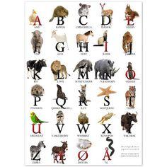 ABC plakat med fotos af dyr. A som and... Vælg mellem 2 størrelser
