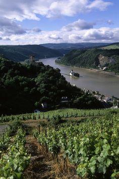 Vineyards on the Rhine River, Pfalzgrafenstein Castle on Island and Gutenfels Castle, Germany.  Photo: Wolfgang Kaehler