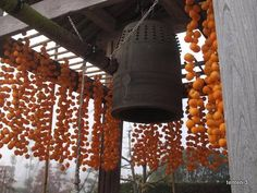下伊那郡高森町にある松源寺(しょうげんじ)さんの鐘楼です、    今年も干し柿の、柿すだれが出来ていました。    今朝は霧の中(冬場はよく朝霧が出ます、当地では霧が出るとその日は晴れと言われています)    春の桜(上の写真)が見事ですが、桜の木も今朝はシルエット・・・。   ...