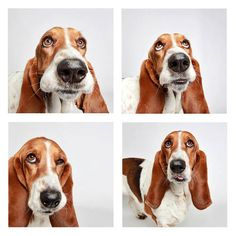 13   If You Don't Wanna Adopt These Dogs After Their Photo-Booth Sessions, You're Crazy   Co.Create   creativity + culture + commerce