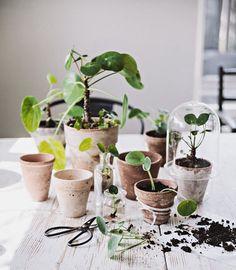Plants are always nice